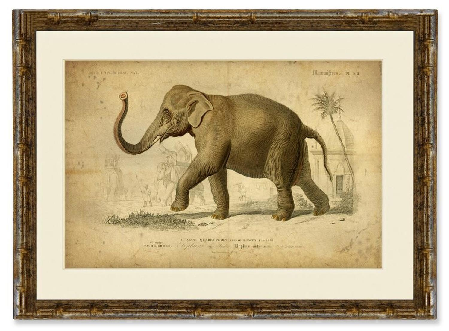 Elephant in a Gold Bamboo Frame