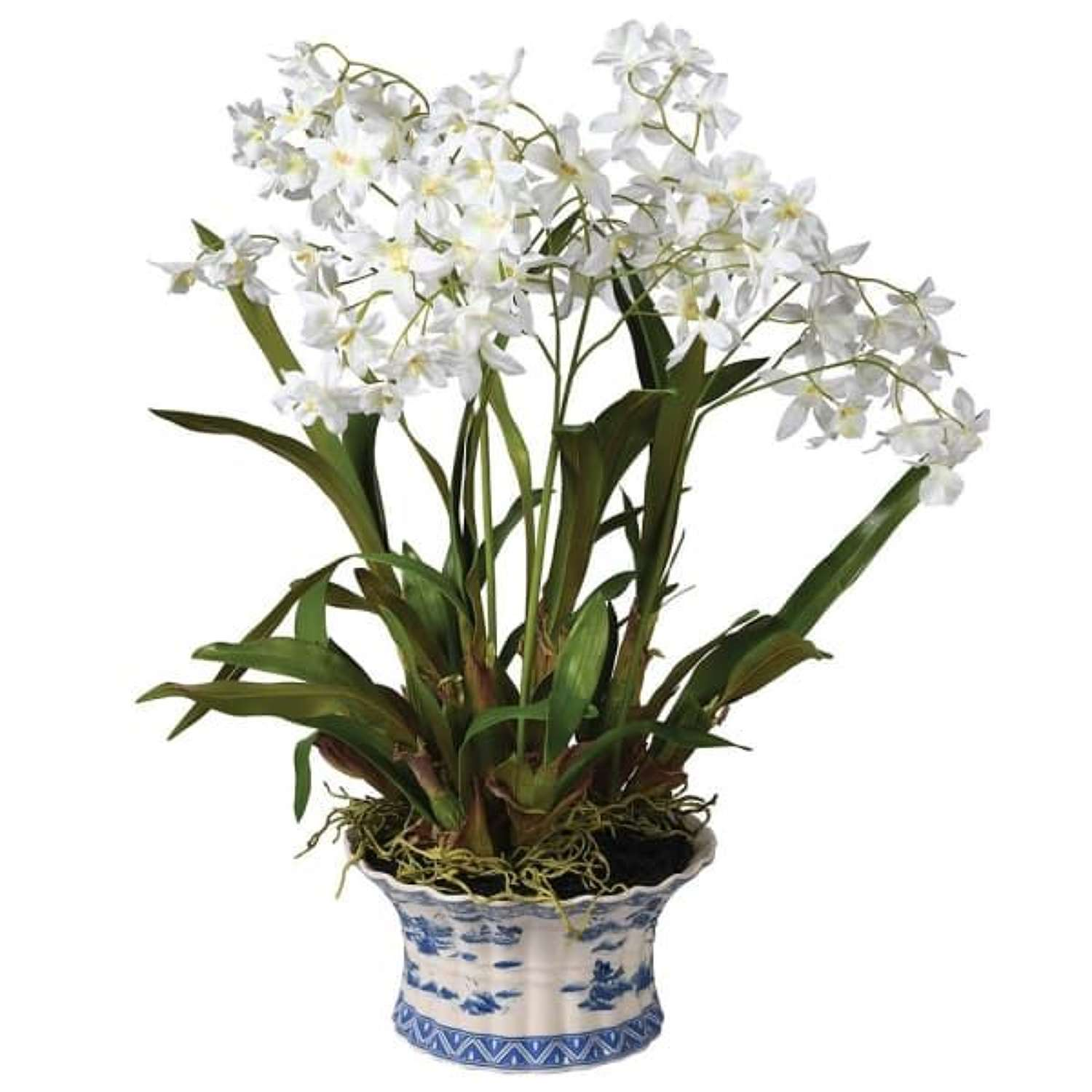 White Dancing Orchid in Chinoiserie Pot.